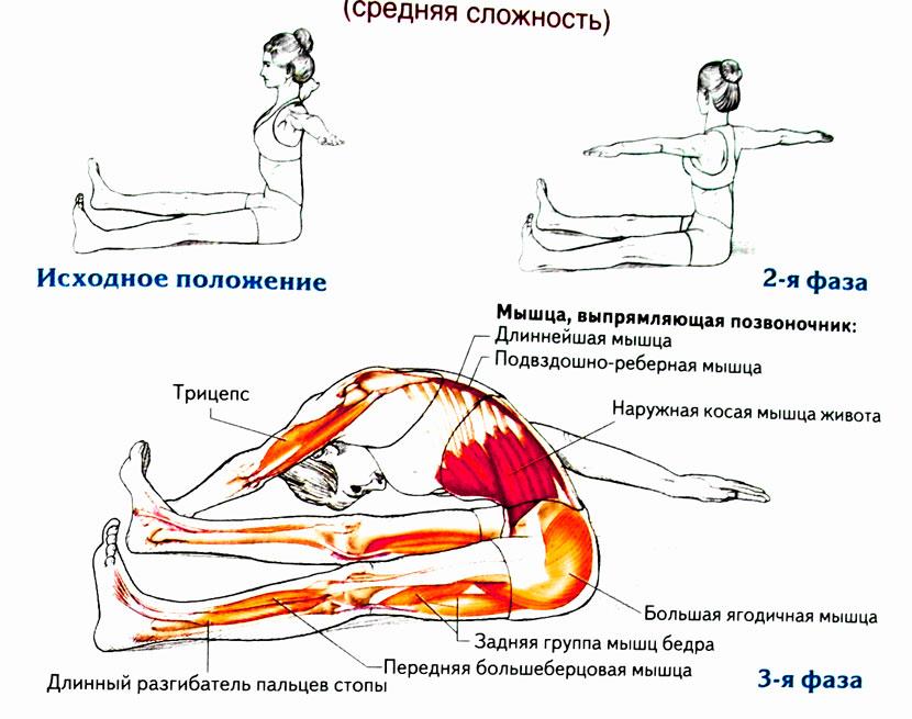 rastjazhka-myshts-spiny