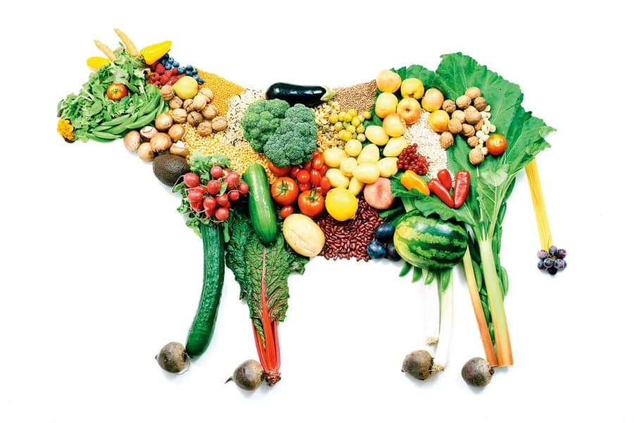 Vegany-i-vegetariantsy-v-chem-raznitsa